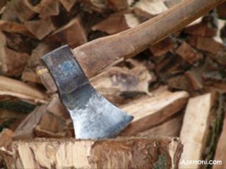 خطر قطع درختان و کاهش تنوع زیستی