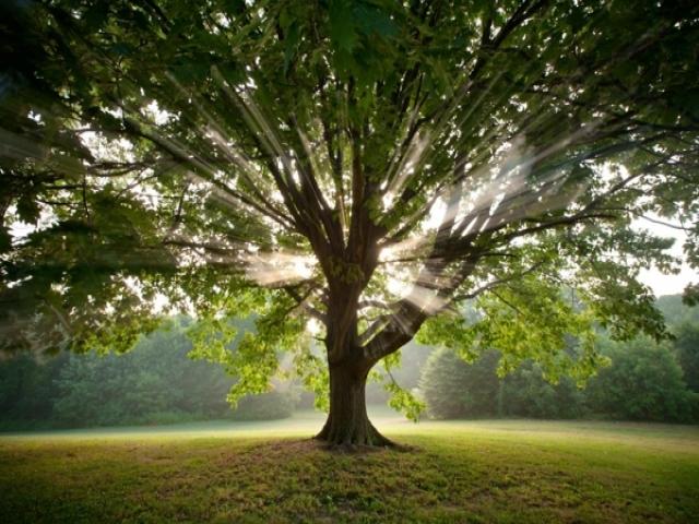 داستان کوتاه درخت قوم بنی اسرائیل