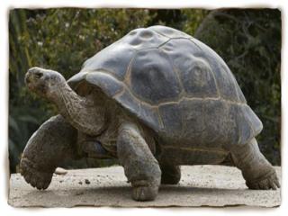 این جانور قدیمی ترین موجود زنده دنیاست
