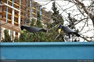Attack of the crows to a house in Tehran.