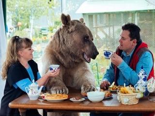 ماجرای جالب زندگی یک خرس همراه یک زوج