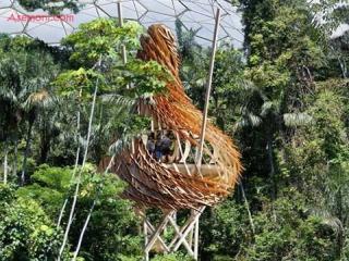 طرح های جدید خانه درختی تنوع زیستی