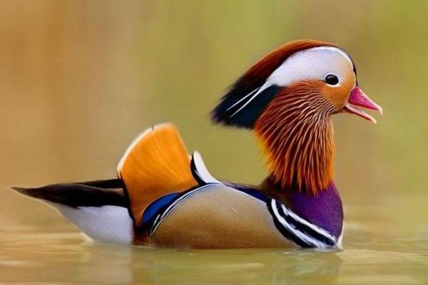 10 cute bird world (1)