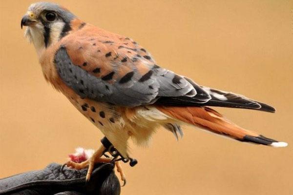 10 cute bird world (3)