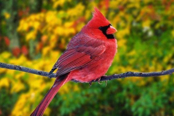 10 cute bird world (6)