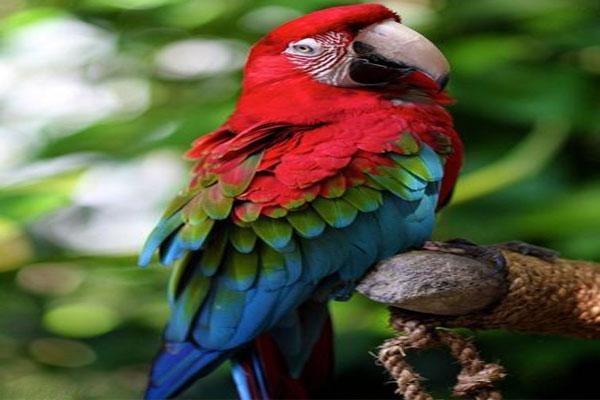 10 cute bird world (8)