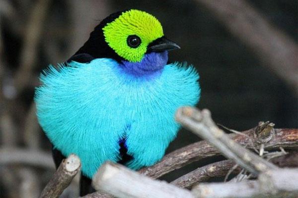 10 cute bird world (9)