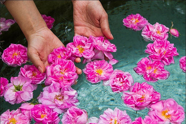 The properties of the smell of rose water when fasting!