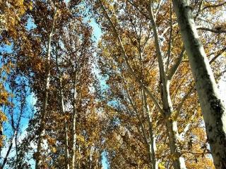 آسمان پاک پاییزی در جهانشهر کرج