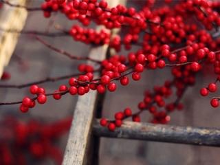 زمان و روش سم پاشی درختان میوه