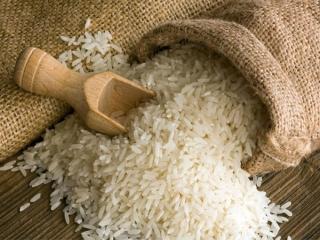 کاهش قیمت برنج در فصل برداشت