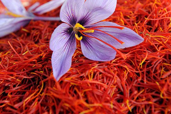 Afghanistan-Iranian-saffron-exports!