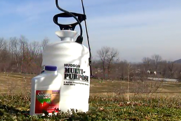 time-and-method-for-spraying-fruit-trees-77