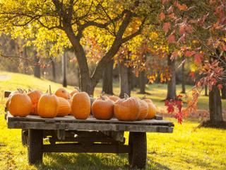 دکوراسیون پاییزی زیبا برای منزل