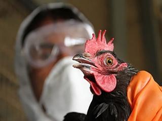 آغاز طرح مقابله با آنفلوآنزای پرندگان در سال جاری