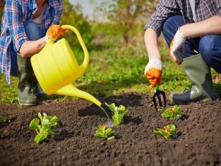روش کاشت سبزیجات در خانه