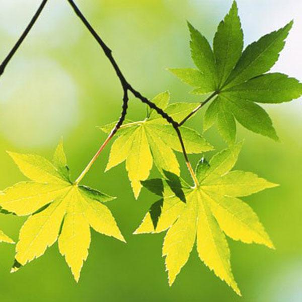 autumn-profile-photos-1