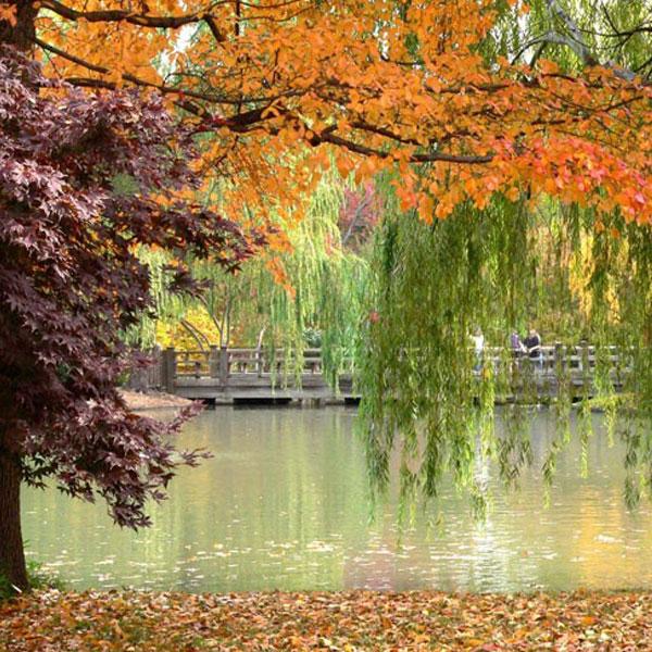 autumn-profile-photos-10