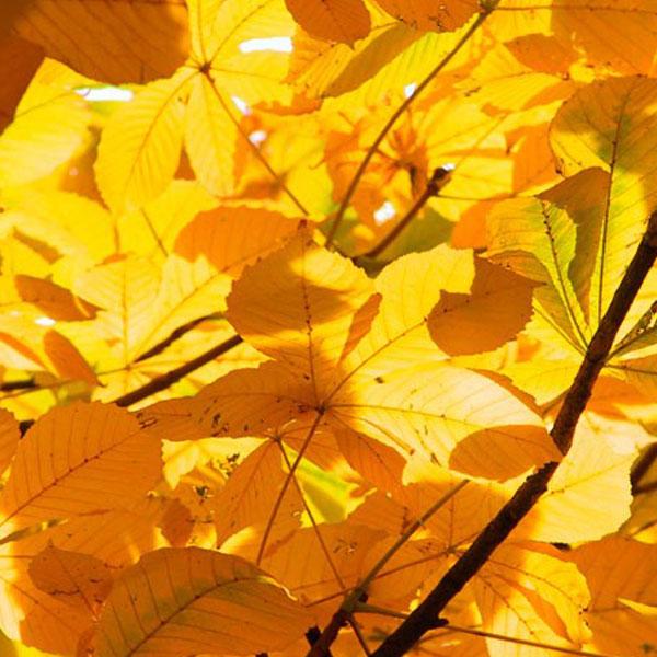 autumn-profile-photos-22