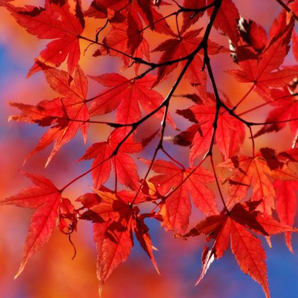 autumn-profile-photos-33