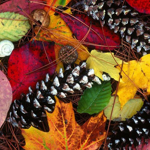 autumn-profile-photos-4