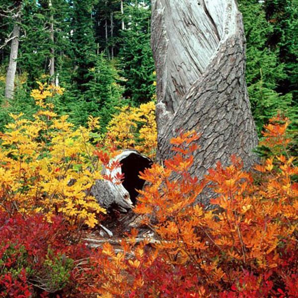 autumn-profile-photos-5