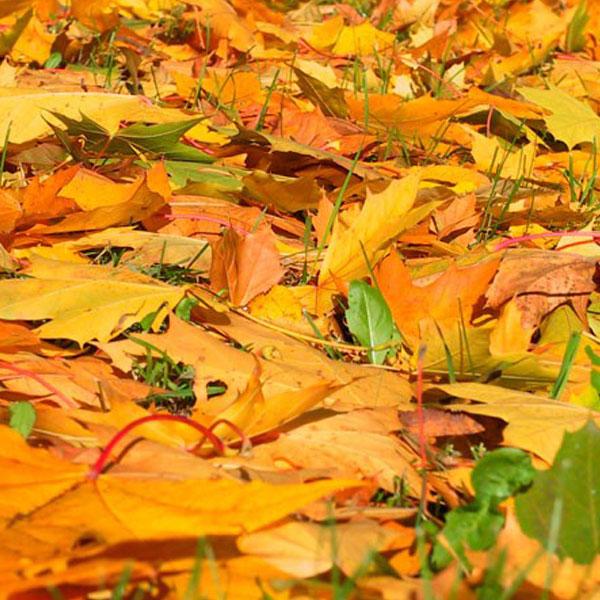 autumn-profile-photos-8