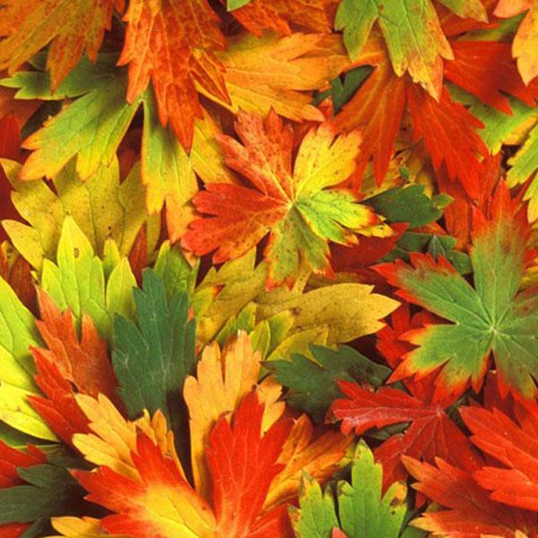 autumn-profile-photos6