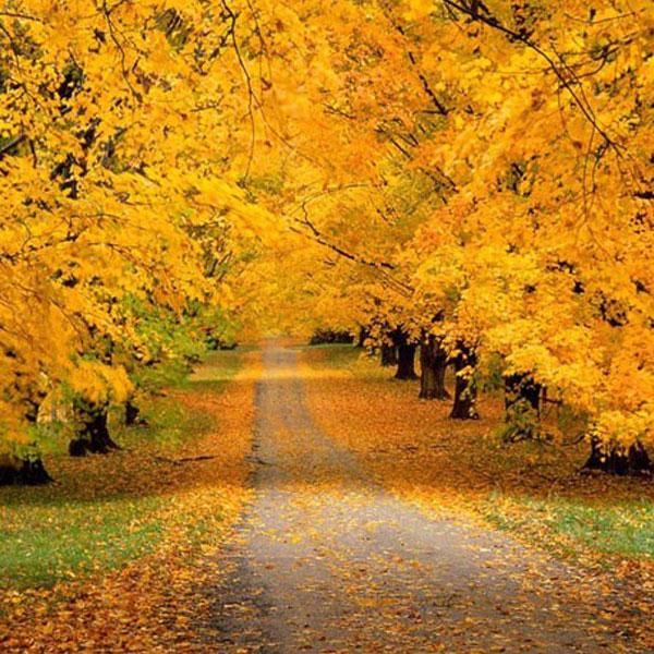 autumn-profile-photos7