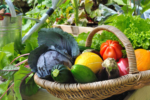 method-of-planting-vegetables-at-home1