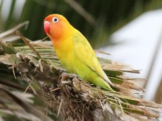 صادرات پوست پرندگان به آلمان و ایتالیا