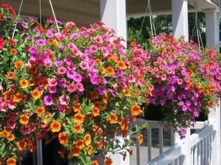 نکات پرورش گل و گياه در خانه
