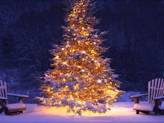 درخت کریسمس نماد چیست