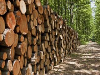 قطع درختان = قطع زندگی