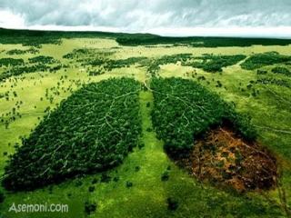 محیط زیست چیست؟