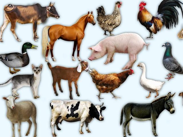 حیوانات اهلی کدامند؟
