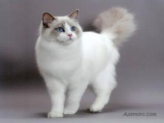 اطلاعاتی در مورد گربه ها