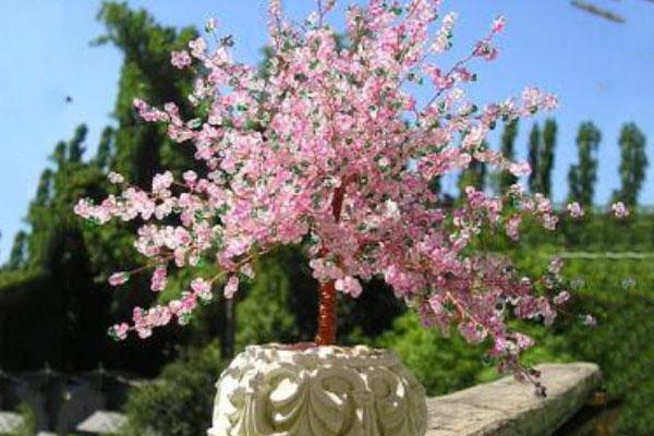 21crystal-shrubs