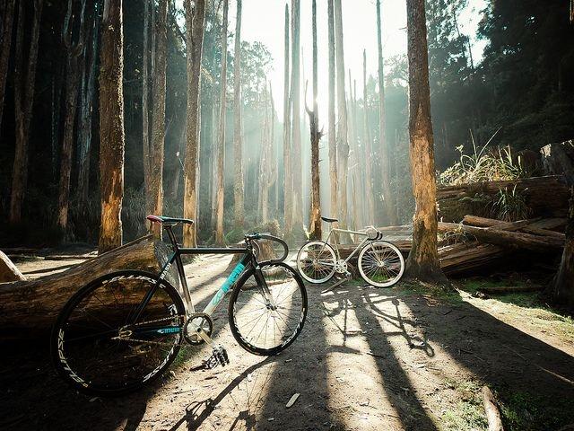 دوچرخه ، یار همراه محیط زیست
