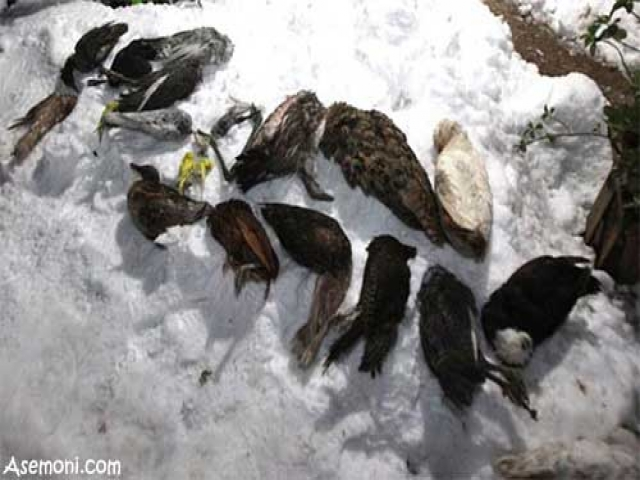 باغ پرندگان شیراز یخ زد!!