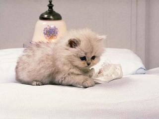 عکس گربه های دوس داشتنی