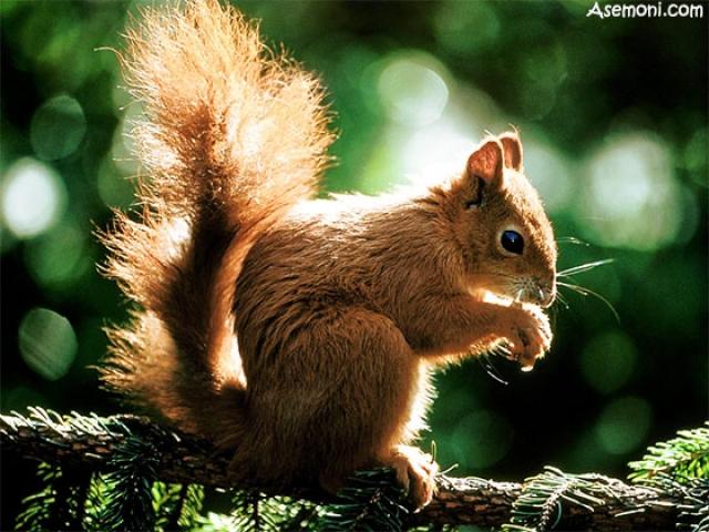 زندگی جالب سنجاب ها