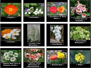 عکس گلهای بسیار زیبا + نام