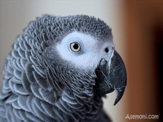 کاسکو، باهوش ترین پرنده