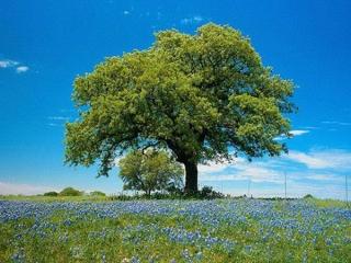 طبیعت بهار در این عکسها پیداست
