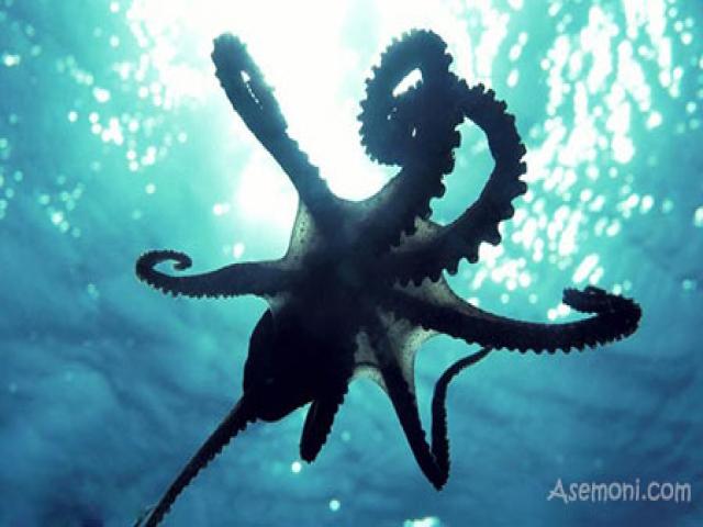 هشت پایان، جانوران هوشمند اعماق دریا