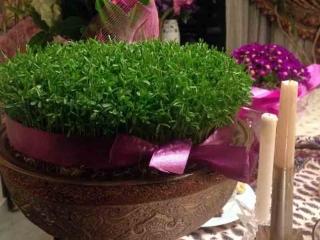 آموزش کاشت سبزه عید نوروز + نماد سین های سفره هفت سین