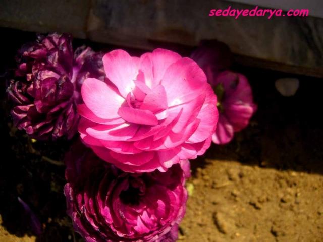 عکاسی از گل های بهاری