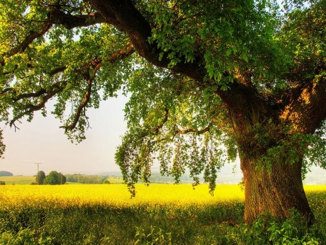 درخت چیست و چه فوایدی برای محیط زیست دارد؟