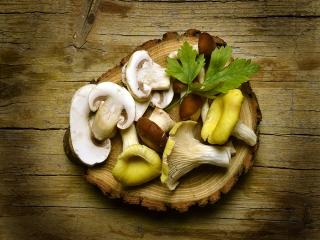 انواع قارچ و خواص خوراکی آنها